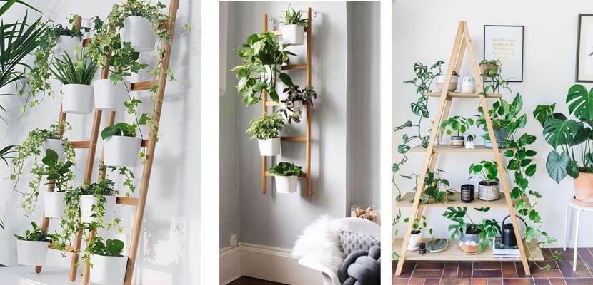 Escaleras de madera como soporte para plantas