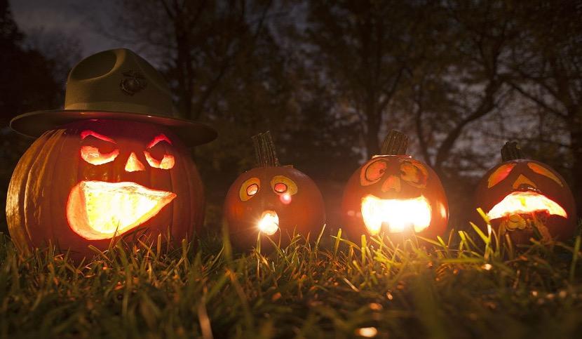 calabazas en el jardin de halloween