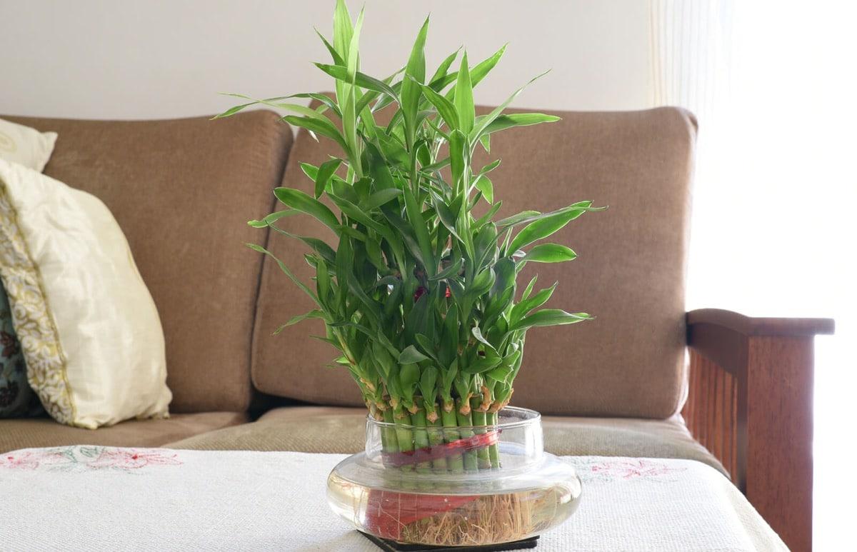 planta zen