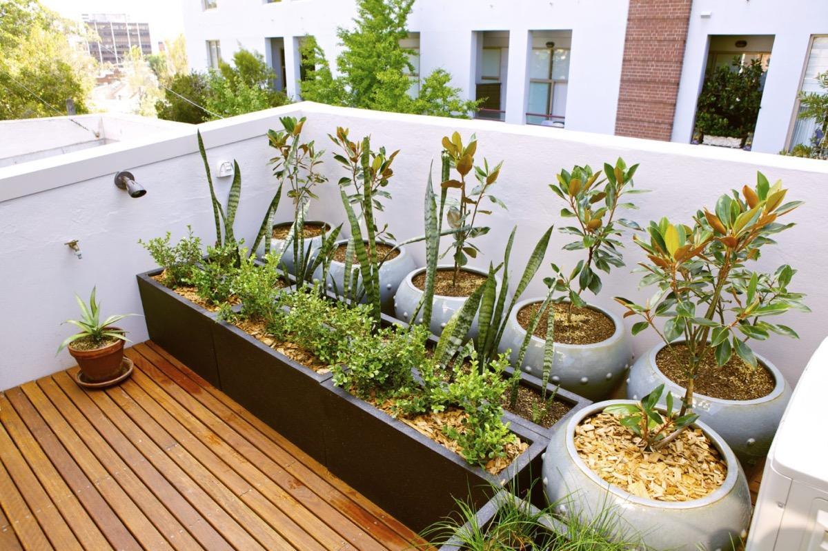 plantas en una azotea