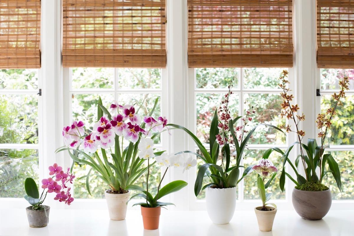 decoracion de casa con orquideas