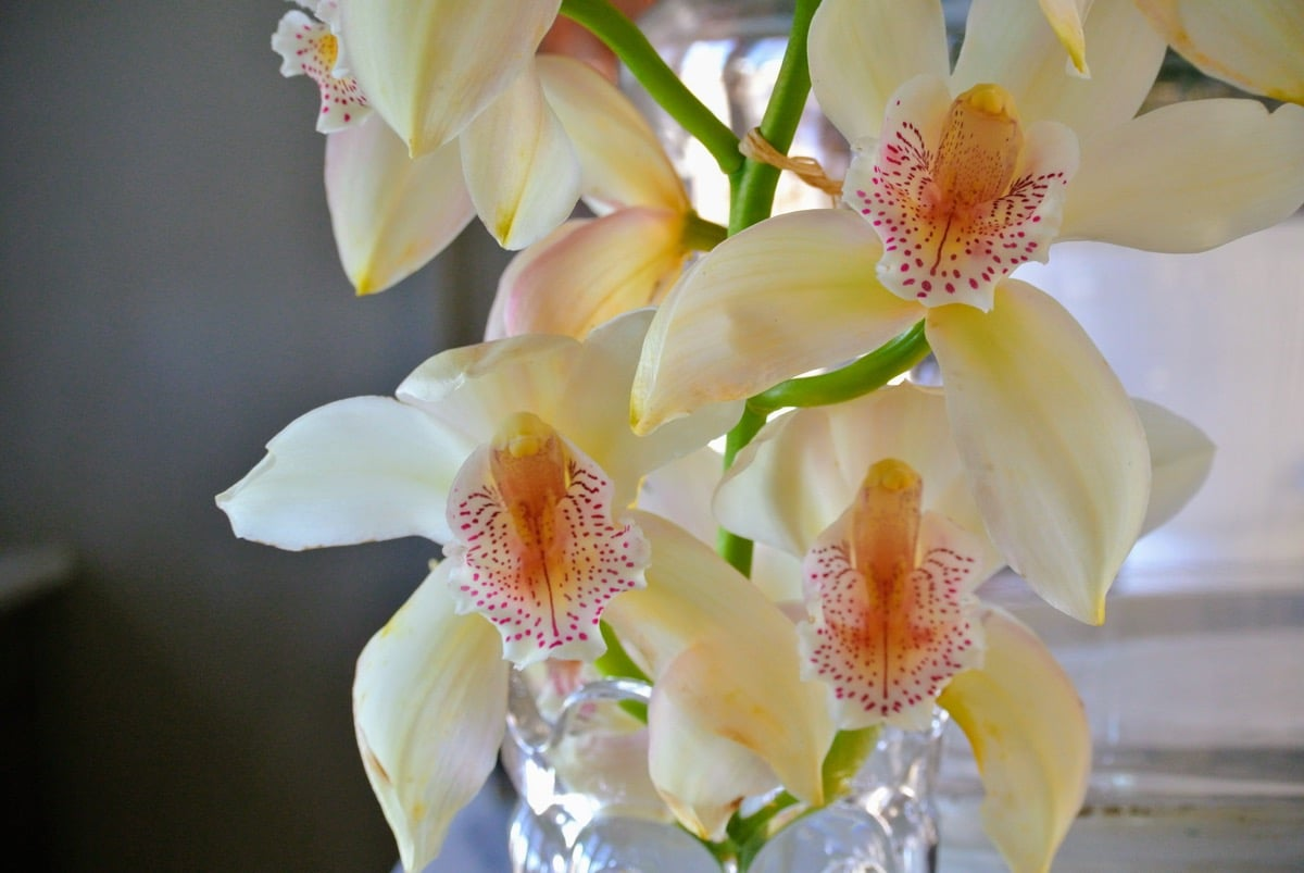 las flores de la orquidea