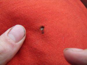 insectos que hacen agujeros
