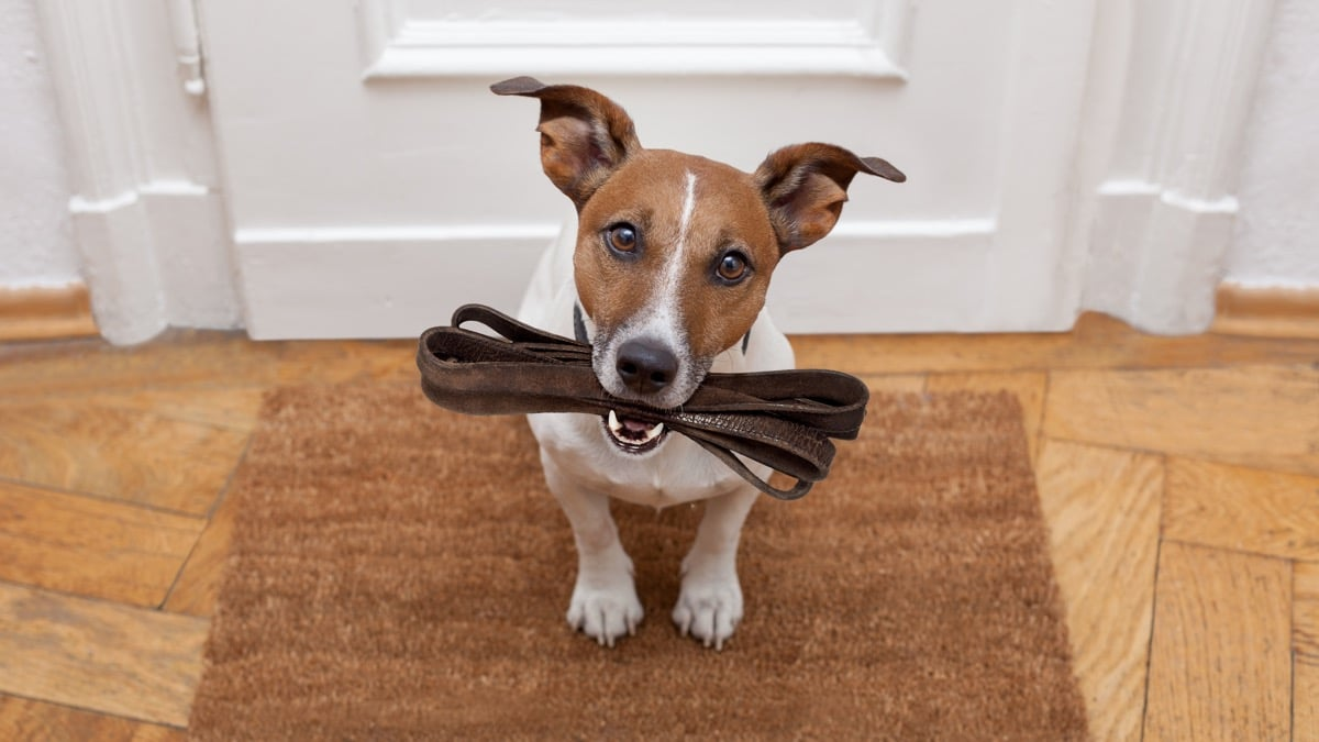 Cuáles son los mejores suelos si tienes mascotas