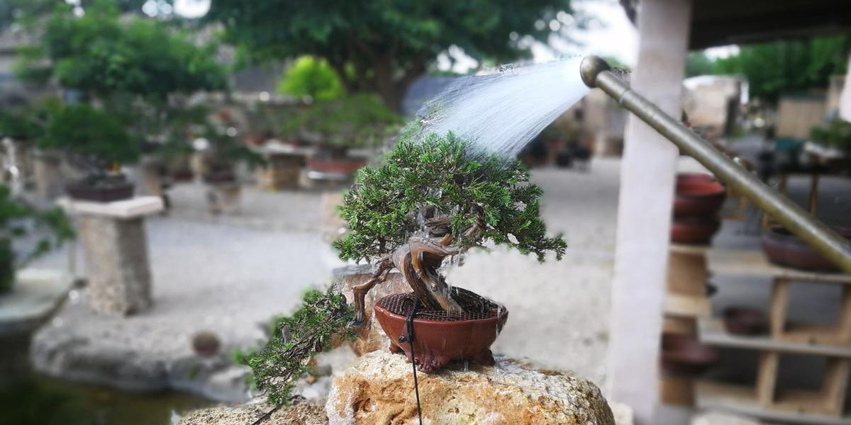 Decorar con bonsáis